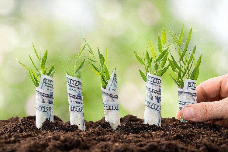 """Ý tưởng làm giàu từ nông nghiệp mang lại lợi nhuận """"khủng"""""""